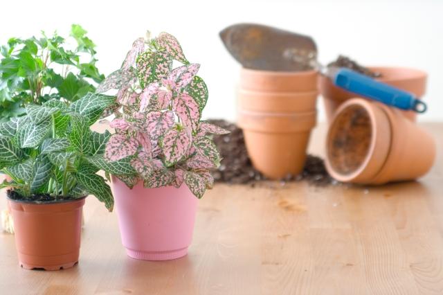 houseplants-repotting