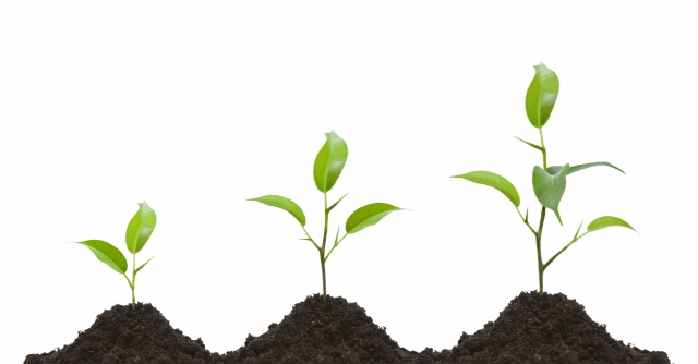 Plant-Growing.jpg