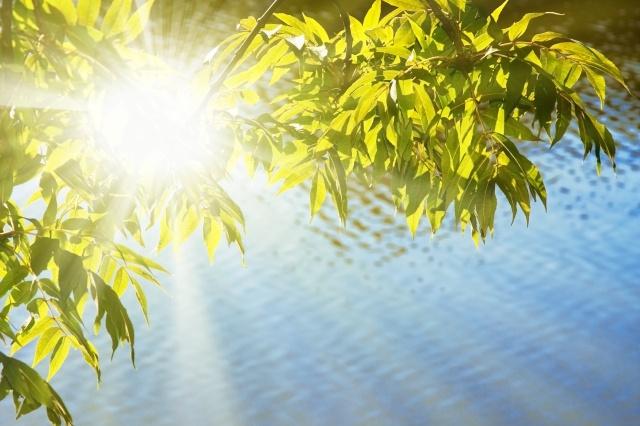 végétal feuille eau nature