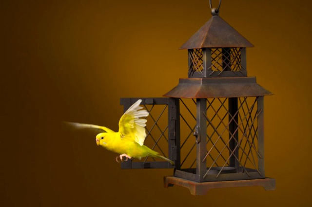 bird_escaping_from_cage_1787270
